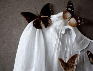 خاکستر پروانهها
