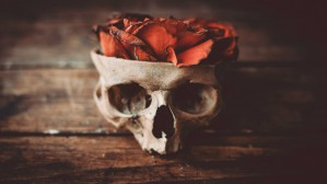 آن گلِ سرخِ مصنوعی